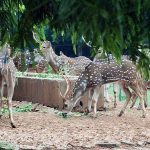 Role of zoos in wildlife conservation