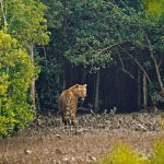Sundarbans was one of the nominees for New 7 Wonders of Nature