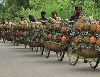 Pineapple export from Bangladesh