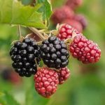 Top 21 Healthiest Fruits in the World